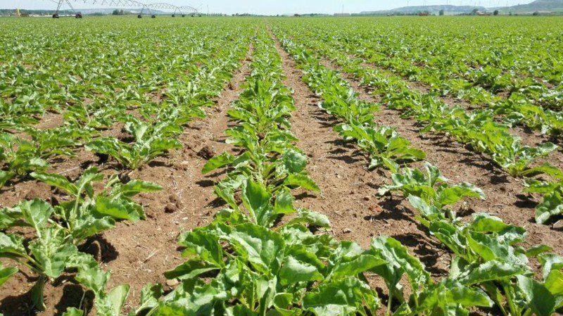 Resultado de imagen para Seguridad alimentaria desde los cultivos