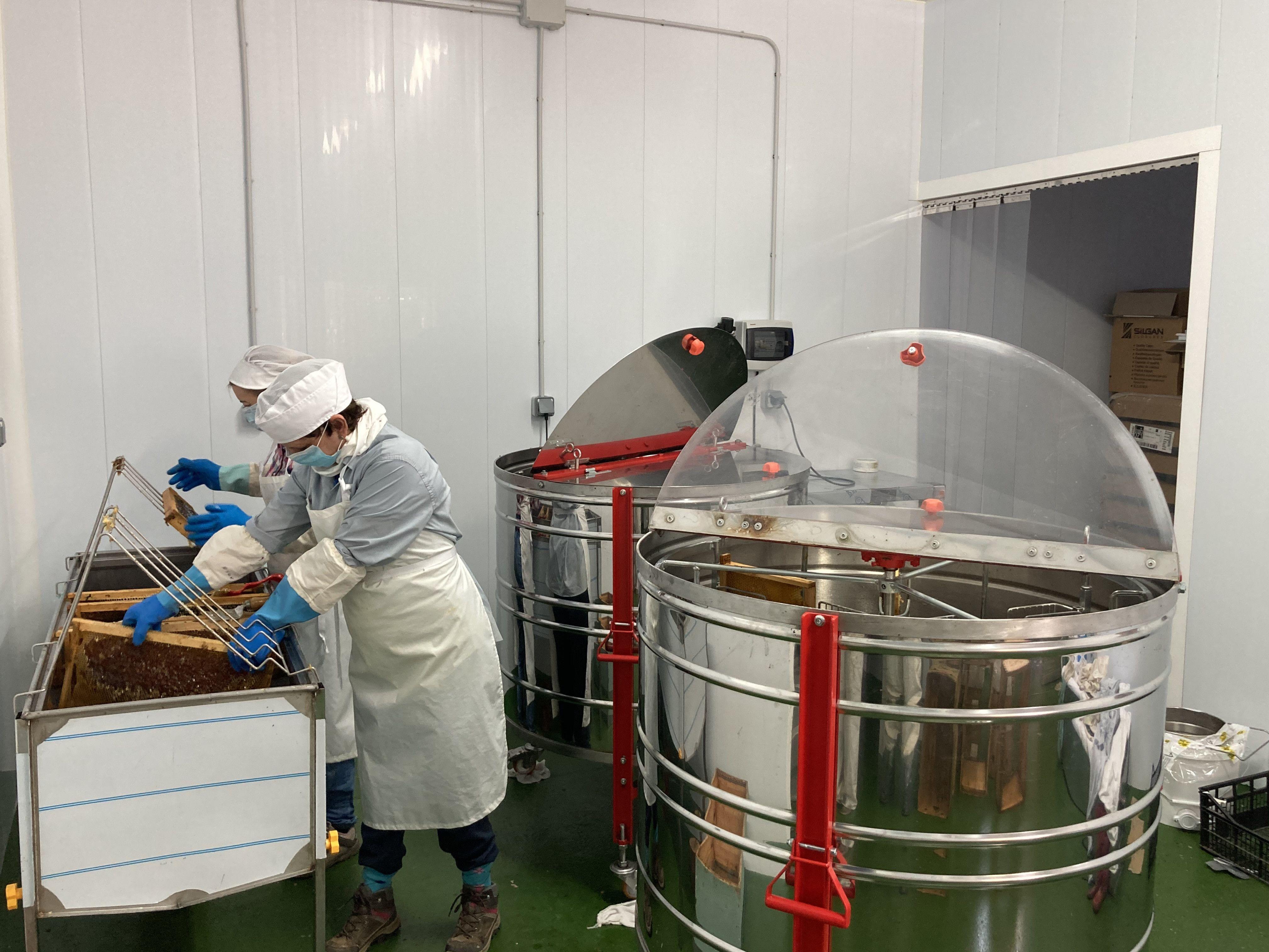 Obreras de aliste miel apicola (1)